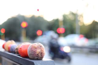 Rottingfruit-1